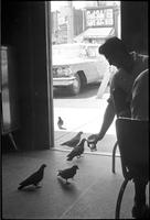 Clifton House Tavern : Pigeons