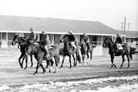 New Woodbine : racehorses train for opening of season