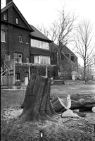 6 Lawrence Crescent : tree cut down by mistake