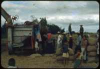 Palay Threshing, Capas, Tarlac