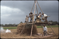 Threshing palay, Iloilo