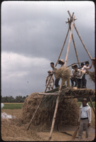 Threshing, Iloilo