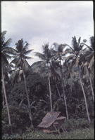 Coconut laborers hut, Camarines Sur