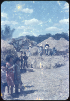Threshing rice in Tarlac