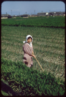 Woman in field near Shitsuki