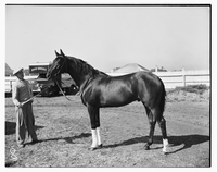 Racehorse : Grilled
