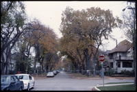 Tree-lined intersection west of the Manitoba Legislature