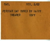Cat : Persian Cat Owned by Harry Shearer [copy]