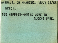 Animals : Chimpanzee : Heidi : See Hippies--Music Love in Queens Park