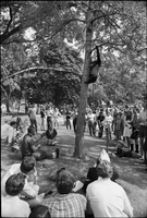 Image of people watching a chimpanzee climb a tree at a love-in in Queen's Park.
