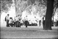 Older men play cards on picnic tables in Alexandra Park.
