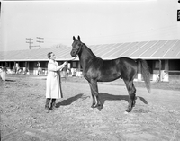 New Woodbine Racetrack : women working : Helen Principe, Petty Major and Olive Armstrong