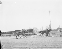 Racetracks : Woodbine : first and second races