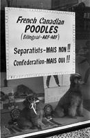 Dogs : Poodles [not used]