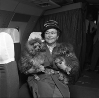 Dogs : Canine Airlift to Bermuda : Eagle Airways