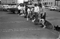 Dog Obedience Course at Lawrence Plaza