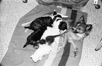 Dog : Gypsy, and Kittens She Adopted