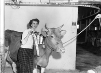 Cows : Duncan, Bartley and Mary Bull with Jersey Cow. Janet Ball with Ayrshire Calf