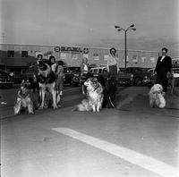 Dogs : North York : Obedience Club