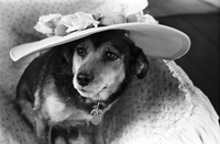 Dogs : Toronto Humane Society Dogs Wearing Hats