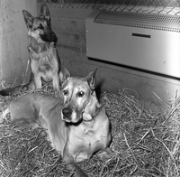 Dogs : Brunhilde and Keera Have Electrically Heated Doghouse [not used]