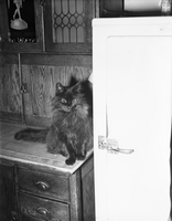 Cat : At refrigerator [not used]